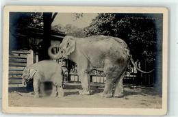 53091001 - Afrikanische Elefanten - Elefanten
