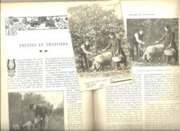Revue, Toilette Des  Truffes Truffe Martel LOT. ANIANE (34) Les Douaires GAILLON (Eure) - Libri, Riviste, Fumetti