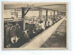 Forges Lez Chimay Abbaye De Scourmont Une étable Bien Garnie - Chimay