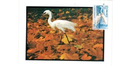 Carte /  Aigrette Garzette    /  Villars Les Dombes   / 15-2-75 - Cartoline Maximum