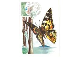 Carte /  Guyane    /  Cayenne  / 16-10-76 - Maximumkarten