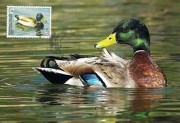 Moldova Transnistria 2013 - Bird - Mallard (maxicard) - Anatre