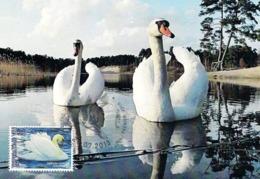 Moldova Transnistria 2013 - Bird - Mute Swan (maxicard) - Cigni