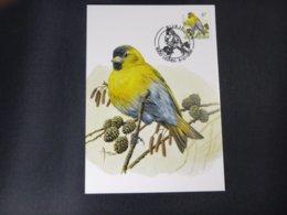 """BELG.1996 2665 FDC Mcard: Buzin """"  Sijsje / Tarin  """" - 1985-.. Birds (Buzin)"""