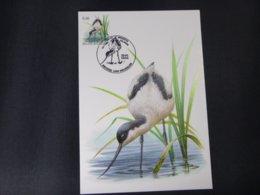 """BELG.2006 3479 FDC Mcard: Buzin """"  Avocette / Kluut  """" - 1985-.. Birds (Buzin)"""