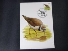 "BELG.2004 3267 FDC Mcard: Buzin ""  Petit Gravelot / Kleine Plevier   "" - 1985-.. Birds (Buzin)"