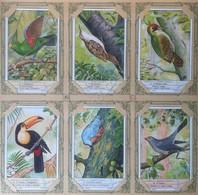 Figurine Liebig Italia - Sang. 1365 - Uccelli Rampicanti - 1937 *** - Liebig