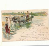 ROMANIA   ROEMANIE OUMANIE  RUMANIEN   WATERBUFFEL  BUFFALO   BUFAL  1902 VERS  LIEGE - Roumanie