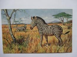 ZEBRES   .....          TTB - Zebras