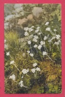 Fiori - Piccolo Formato - Viaggiata - Flowers