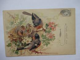 COUPLE  D ' OISEAUX    ET  OISILLONS           TTB - Birds