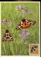 48654 Switzerland  Maximum 1955 Butterfly  Schmetterlinge,  Papillon   Pro Juventute 1955 - Farfalle