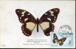 48665 Malawi    Maximum 1966 Butterfly  Schmetterlinge,  Papillon - Farfalle