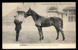 Cheval HAROLD, équitation - Chevaux