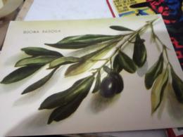 OLIVO  OLIVE OLIVEN ILLUSTRATA BUONA PASQUA  VB1941  HG1335 - Trees