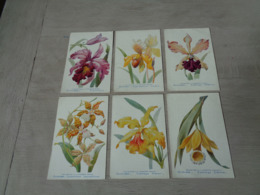 Beau Lot De 20 Cartes Postales De Fleurs Fleur Orchidée Publicité Pharmacien   Mooi Lot  20 Postkaarten  Bloemen Bloem - Cartes Postales