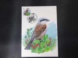 """BELG.2000 2885 FDC Mcard: Buzin """"  Pie-grièche écorcheur  """" - 1985-.. Birds (Buzin)"""