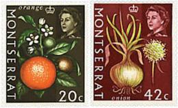 Ref. 267213 * NEW *  - MONTSERRAT . 1965. FRUITS. FRUTOS - Montserrat