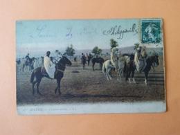 Algérie Cavaliers Arabes - Algérie