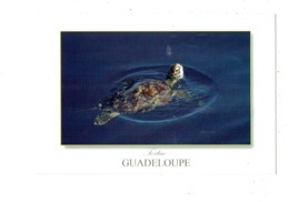 Cpm - GUADELOUPE - TORTUE - Edit Le Photographe 1167 - 2014 - Schildpadden