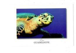 Cpm - GUADELOUPE - TORTUE - Edit Le Photographe 1183  - - Schildpadden