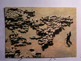 Agriculture - Elevage - La Transhumance - Breeding