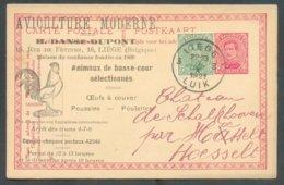 Belgium Animaux De Basse-cour COQ (AVICULTURE MODERNE) Ill. Sur CP De LIEGE 7-X-1921 Vers Hoesselt - 14688 - Hoftiere