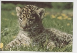 Petit Jaguar (éclaireurs Unionistes De France) - Sonstige