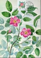 48699 Finland,  Maximum 1994  Flower  Rosa Acicularis - Maximum Cards & Covers