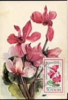 48702 Germany Ddr, Maximum 1966, Flower  Cyclamen,  Mi-1192 - DDR