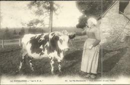 ( NORMANDIE ) (  LA VIE NORMANDE )( AGRICULTURE )( FERME ) Une Fermiere Et Son Tresor - Farms