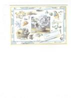 Grande Cpm - Illustration Marjolein Bastin - Coquille Coquillage Escargot Champignon Insecte - Blue - - Fancy Cards