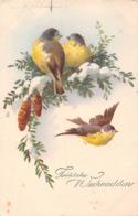 Fröliche Weihnachten - Mésanges - Pives - Autres