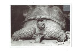 Cpsm - Anonyme - Petite Et Grande Tortue - - Schildpadden