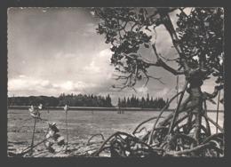 Noumea - Palétuviers / Mangroves - Photo Card / Carte Photo - Nouvelle Calédonie