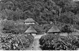 AFRIQUE NOIRE - GUINEE (ex Francaise) CONAKRY : Vue Des Plantations De QUINQUINA - CPSM Dentelée N/B Format CPA - Africa - Guinée Française