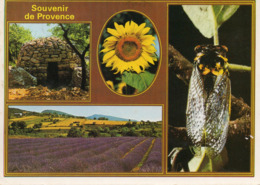 CPM - N1 - SOUVENIR DE PROVENCE - LAVANDE - TOURNESOL - CIGALE - Provence-Alpes-Côte D'Azur