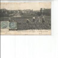 91-LA ROCHE VILLEBON LA CUEILLETTE DES FRAISES PAS COURANTE - Francia
