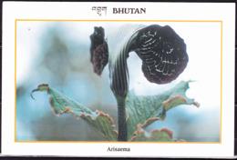 Bhutan - Farbige Postkarte Arisaema (Feuerkolben)       !lesen/read/lire! - Flowers, Plants & Trees