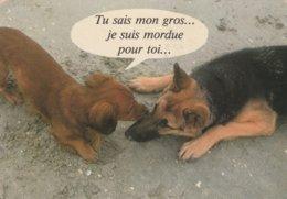 CARTE POSTALE  CHIEN   TECKEL ET BERGE ALLEMAND   P 1379 - Hunde