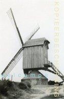 LUMMEN (Limburg) - Molen/moulin - Zeldzame Opname Van De Gewezen Dorpsmolen, Twee Jaar Voor De Brand In 1939 - Lummen