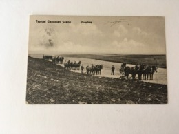 Canada   Typical Canadian Scene  Ploughing  ATTELAGE  LABOURER  CHEVAUX HORSES  AGRICULTURE - Canada