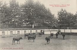 Course Landaise - Mise Au Toril Des Vaches Espagnoles - 1917 - Otros Municipios