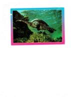 Grande Cpm TORTUE - Egypte - - Schildpadden