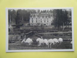 CLÈRES. Le Parc Zoologique. Les Nandous Blancs. - Clères
