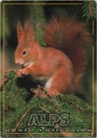 Cartolina Con Scoiattolo, Squirrel, Ecureuil, Eichhoernchen. Viaggiata 1999 - Altri