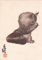 Dessin De Chat David Kwak Mab   (27) - Gatos
