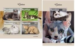 Mozambique 2019 Cats MS+S/S MOZ190520 - Célébrités