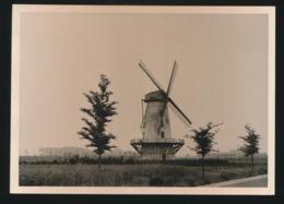 OORDEGEM     FOTO 1960 12 X 9 CM   - MOLEN - Lede