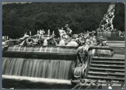 °°° Cartolina - Caserta Palazzo Reale Parco Fontana Di Venere E Adone Viaggiata °°° - Caserta